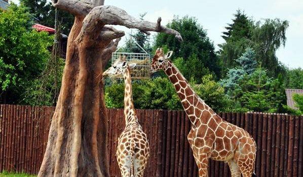 Wycieczka do Zoo w Zamościu